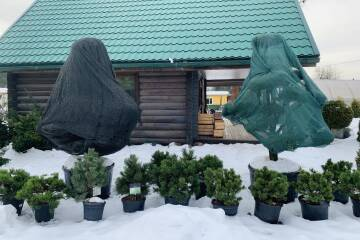 Palīdzēsim augiem arī ziemā