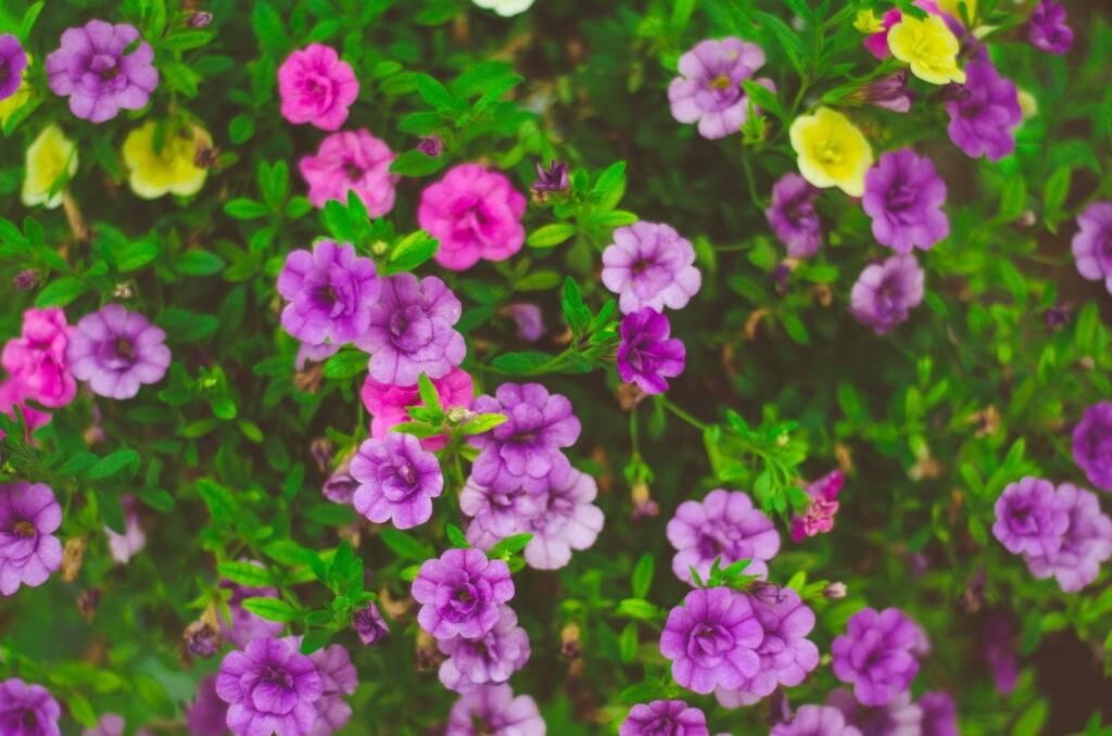 Vasaras puķes jau ziemā!