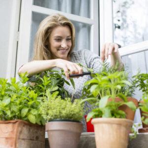 Garšaugi un dārzeņi (PĀRDOŠANĀ NO MAIJA)