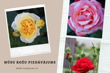 Iepazīsties ar mūsu rožu piedāvājumu