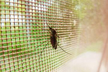 Noderīgi: Speciālistu padomi cīņai ar kukaiņu kodumiem!